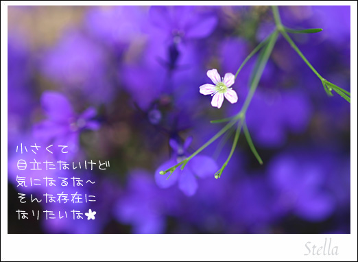 d0015026_10384336.jpg