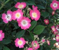 バラの香りにつつまれて。_d0026905_201145.jpg