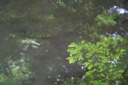 森の精。_b0022268_22501782.jpg