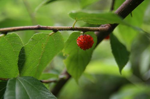 森は、実りの季節。_b0022268_23135857.jpg