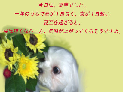 b0060071_20346.jpg