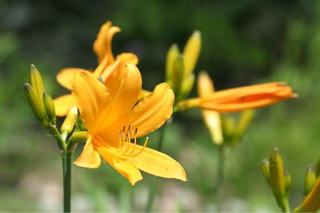 花だより XII_d0012134_23372099.jpg