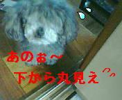 d0012749_2321897.jpg