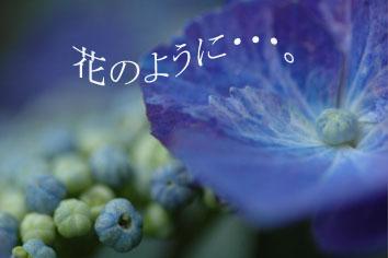 b0058385_1859194.jpg