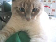 猫スイッチ♪_c0006826_7151087.jpg