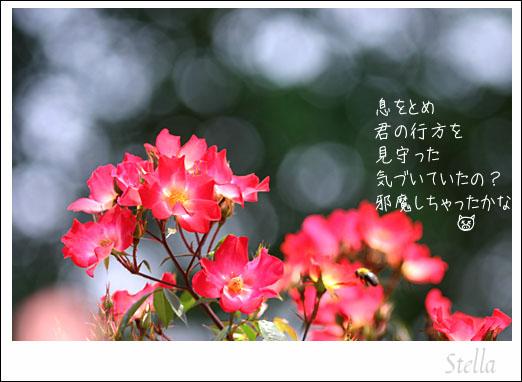 d0015026_9512593.jpg