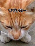 d0068959_093264.jpg