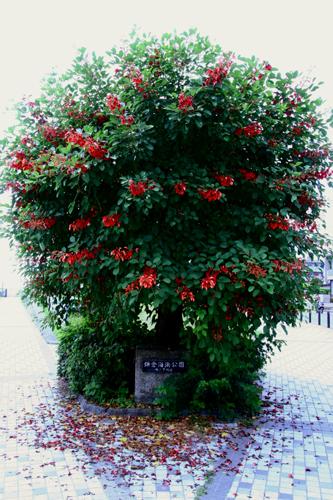 夏のクリスマスツリー。_b0022268_22131882.jpg