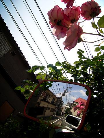 * 1/250秒 * f8.1 * ISO : 100 *  <br /> カメラは デジカメRICOH Caplio GX