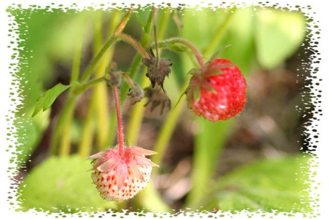 花だより XIII_d0012134_23494456.jpg