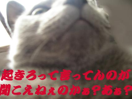 d0056879_157369.jpg