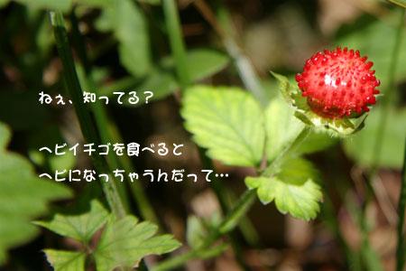 d0036630_10414373.jpg