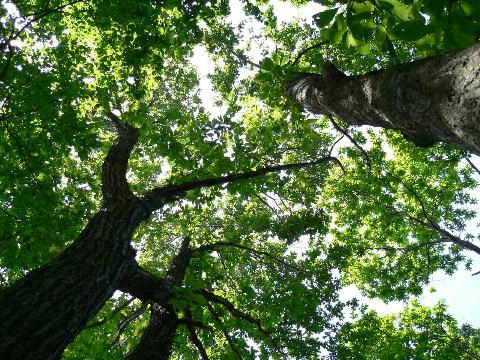 木ってきれいだ_b0068572_20571428.jpg