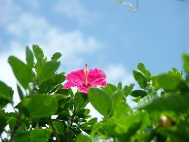沖縄_c0031975_0152550.jpg