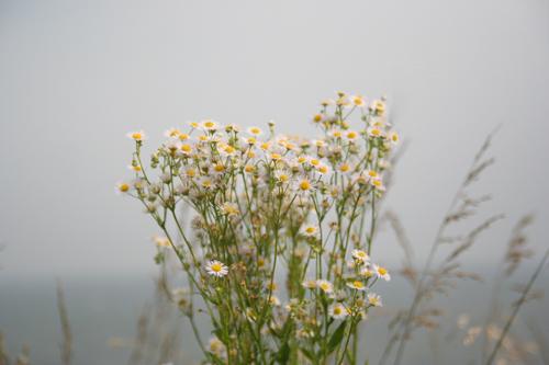 海を望む野の花。_b0022268_2291224.jpg