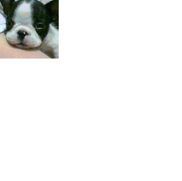 新しい友達_d0003977_17454144.jpg