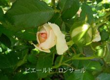 b0032694_2128668.jpg