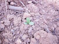 日本の畑を耕したい 2_d0063218_14245453.jpg