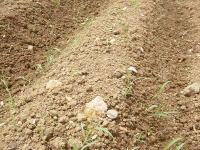 日本の畑を耕したい 2_d0063218_14291934.jpg
