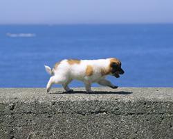犬だって海が好き!?