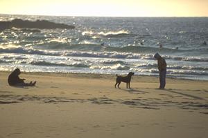 犬と一緒に遊べる海!