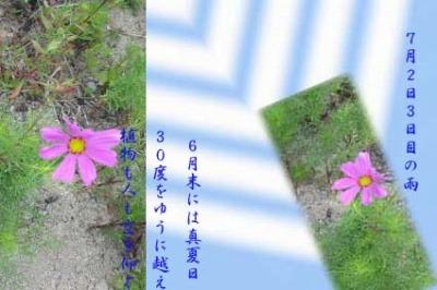 d0029826_21415919.jpg