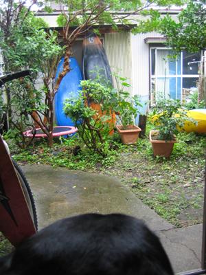雨の月曜日_e0016130_919369.jpg