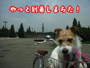 c0031808_1547865.jpg