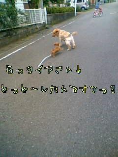 d0046905_132332.jpg