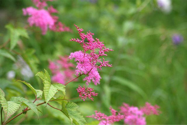 花だより XV_d0012134_005282.jpg