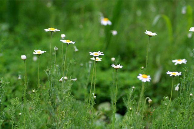 花だより XV_d0012134_0135325.jpg