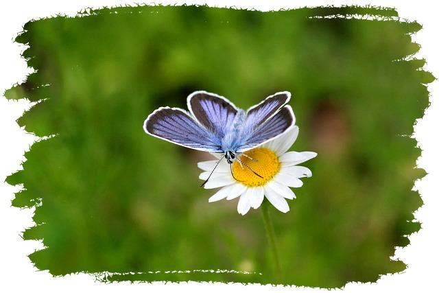 花だより XV_d0012134_0185334.jpg