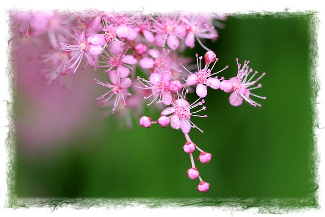 花だより XV_d0012134_063970.jpg