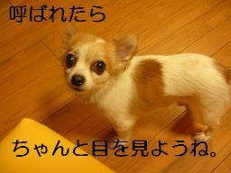 c0004744_2129737.jpg
