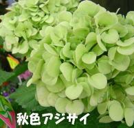 b0066985_18312092.jpg