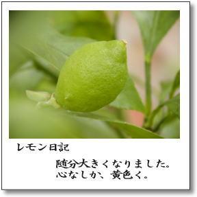 b0066985_6502674.jpg