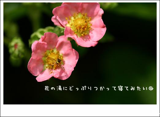 d0015026_10512779.jpg