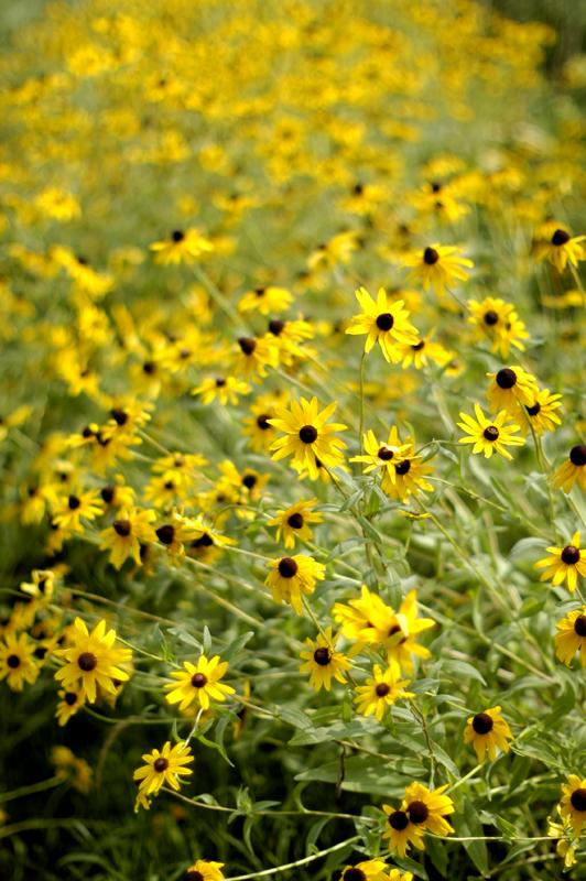 little sun flower_c0075341_2218051.jpg