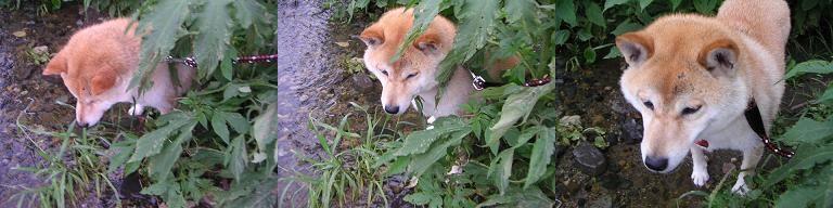 蒸し暑い日曜。。。やっぱり京都どすなぁ。。。_c0049950_23234848.jpg