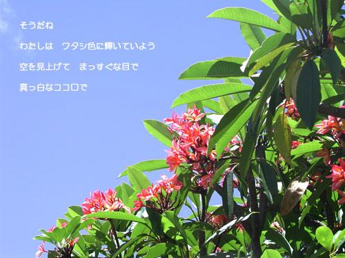 b0045387_0453232.jpg