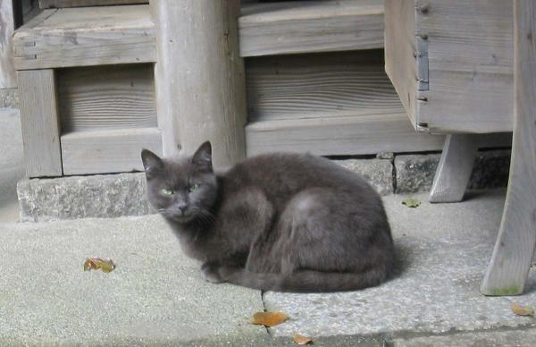 猫か狐か_e0023828_12443217.jpg