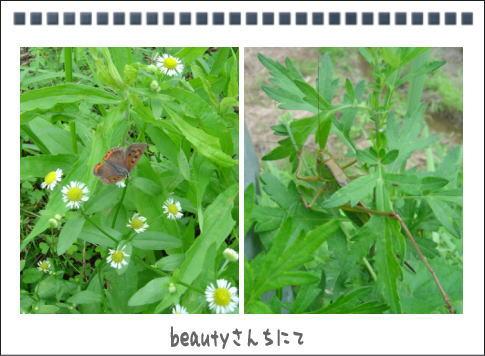 b0066985_1854541.jpg