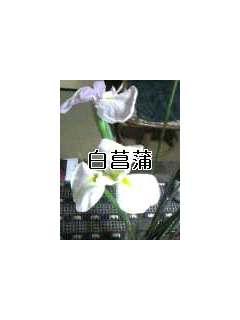 c0031804_23492295.jpg