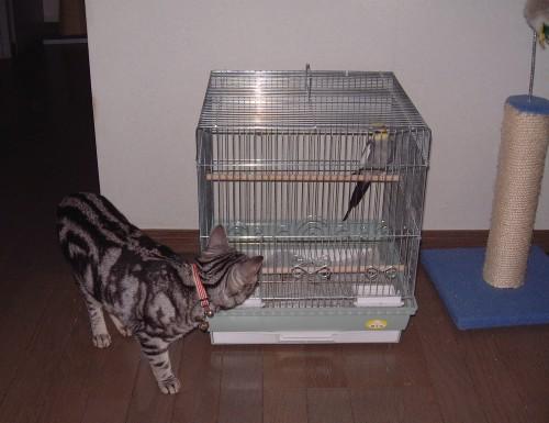 猫とオカメ_d0058182_17295688.jpg
