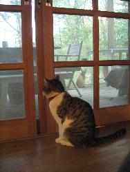 猫ストーカー_d0028589_17401447.jpg