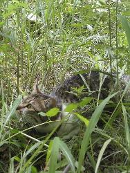 猫ストーカー_d0028589_17403679.jpg