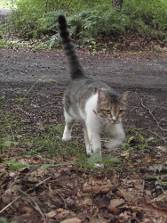猫ストーカー_d0028589_17412068.jpg