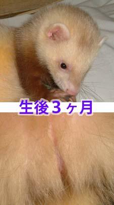 b0025926_17224638.jpg