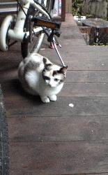 我が家を取り囲む野良猫さん達の話。_d0028589_18414452.jpg
