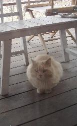 我が家を取り囲む野良猫さん達の話。_d0028589_1847268.jpg